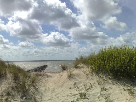 Nordsee-Fotos-Dünenlandschaft